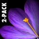 VJ Kaleidoscope - Exotica II - Pack of 7 - 123