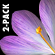 VJ Kaleidoscope - Exotica II - Pack of 7 - 122