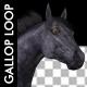 VJ Kaleidoscope - Exotica II - Pack of 7 - 205