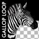 VJ Kaleidoscope - Exotica II - Pack of 7 - 207