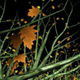 VJ Kaleidoscope - Exotica II - Pack of 7 - 244
