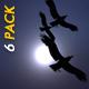 VJ Kaleidoscope - Exotica II - Pack of 7 - 51